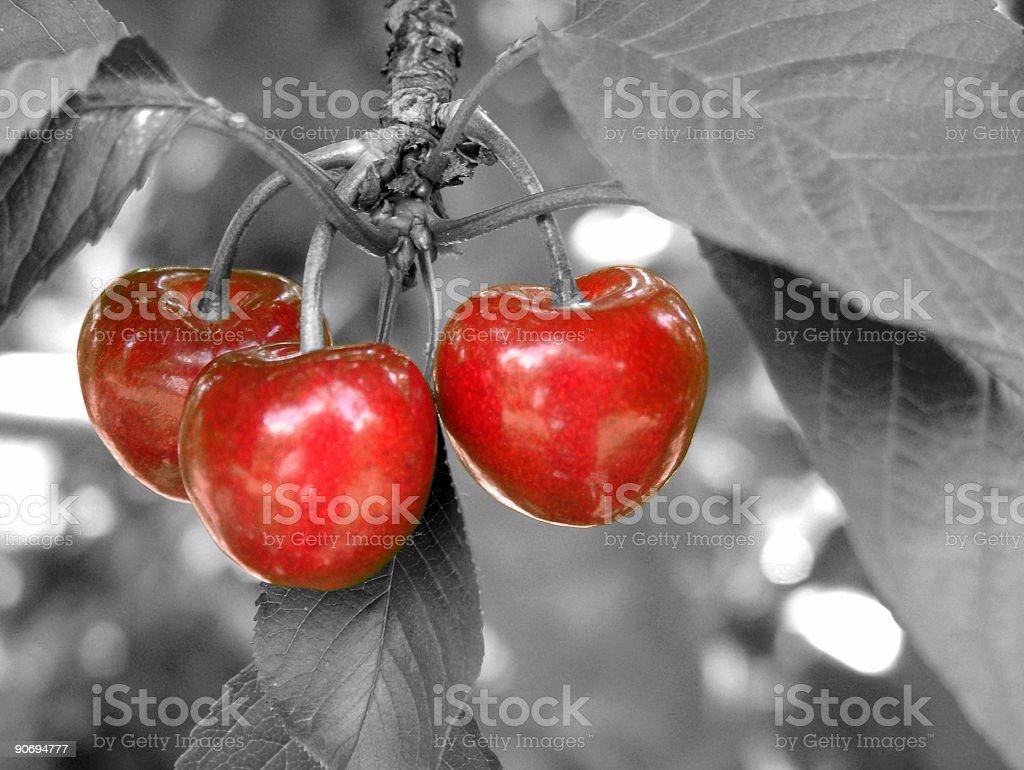 Red Cherries royalty-free stock photo
