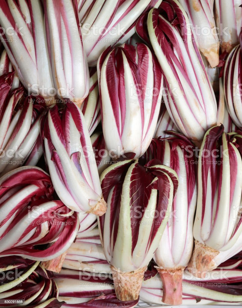 red chicory called Radicchio Rosso di Treviso in Italy stock photo
