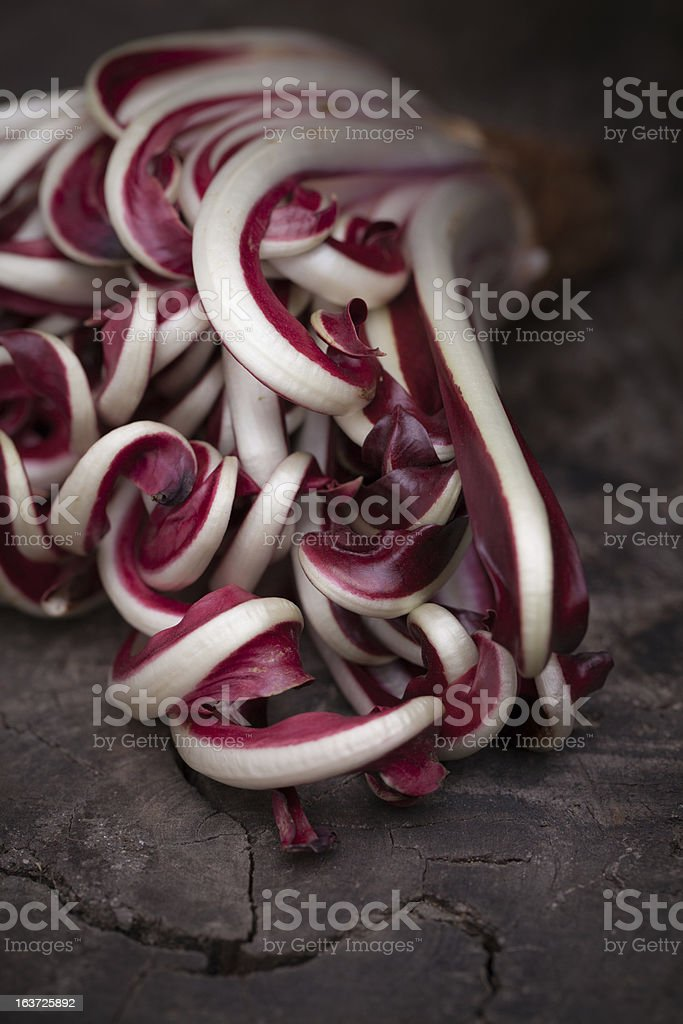 Red chicory stock photo