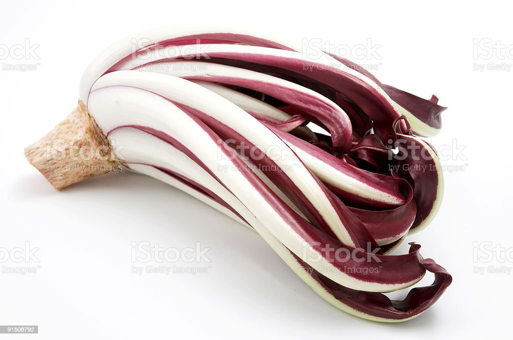 Red chicory royalty-free stock photo