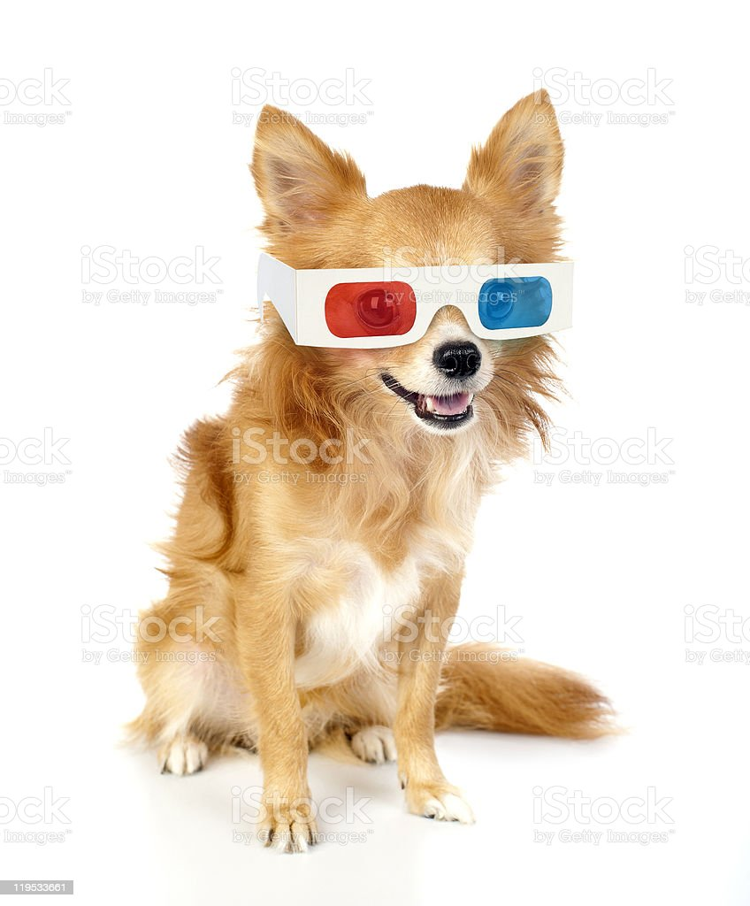 red chihuahua dog with 3d glasses stock photo
