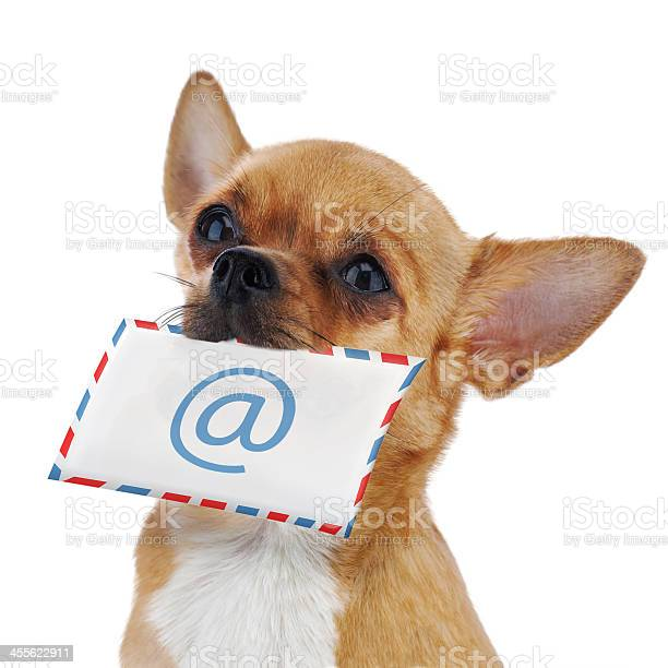 Red chihuahua dog with post envelope and icon emale isolated picture id455622911?b=1&k=6&m=455622911&s=612x612&h=opgjjnsdplnbegaglrbnhivduyd1ybagbbigyk9inrq=