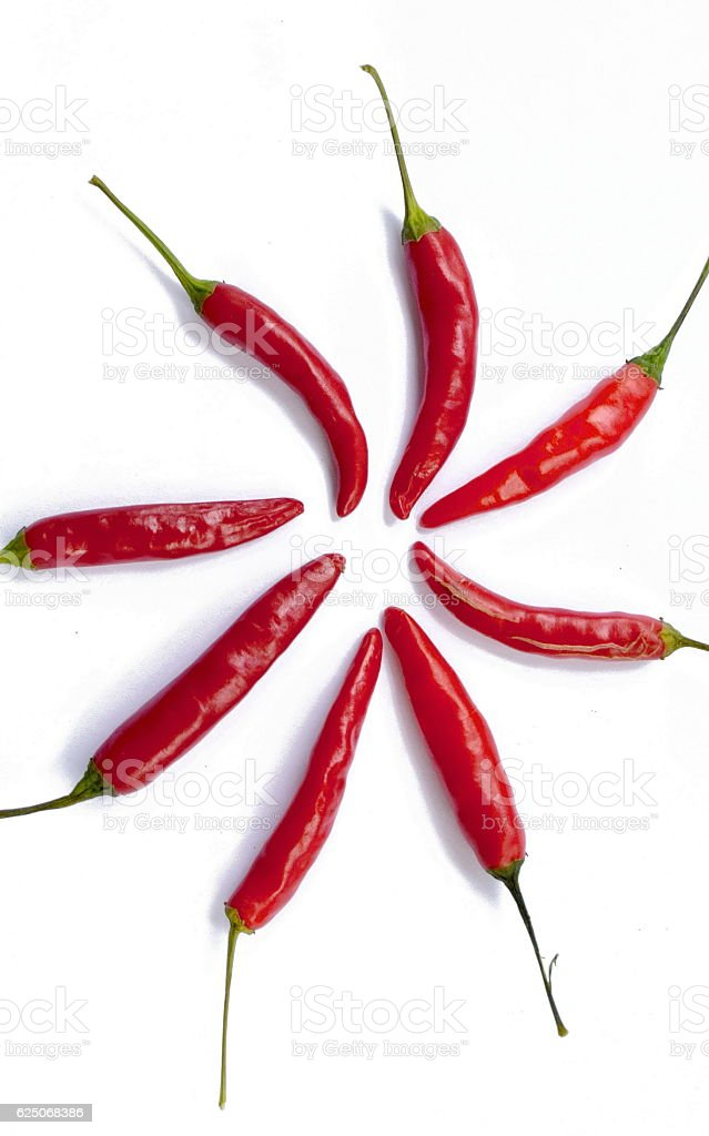 Red chili on white background. stock photo