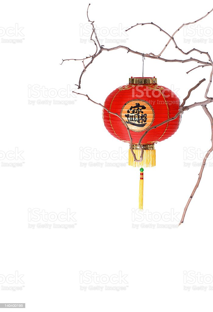 Red Chinese Lantern on a Branch royalty-free stock photo