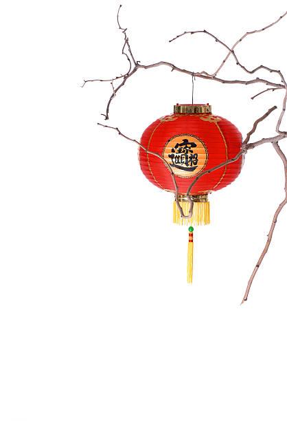 red lanterna chinesa em um ramo - lian empty imagens e fotografias de stock
