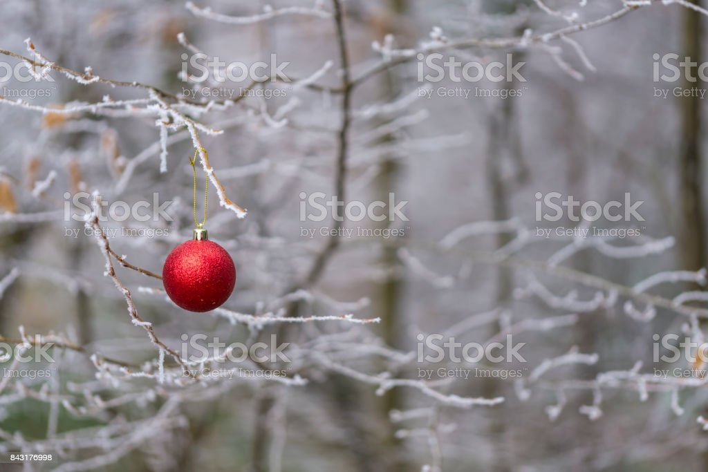 Red Christmas ball ornament hanging on a winter tree branch stock photo