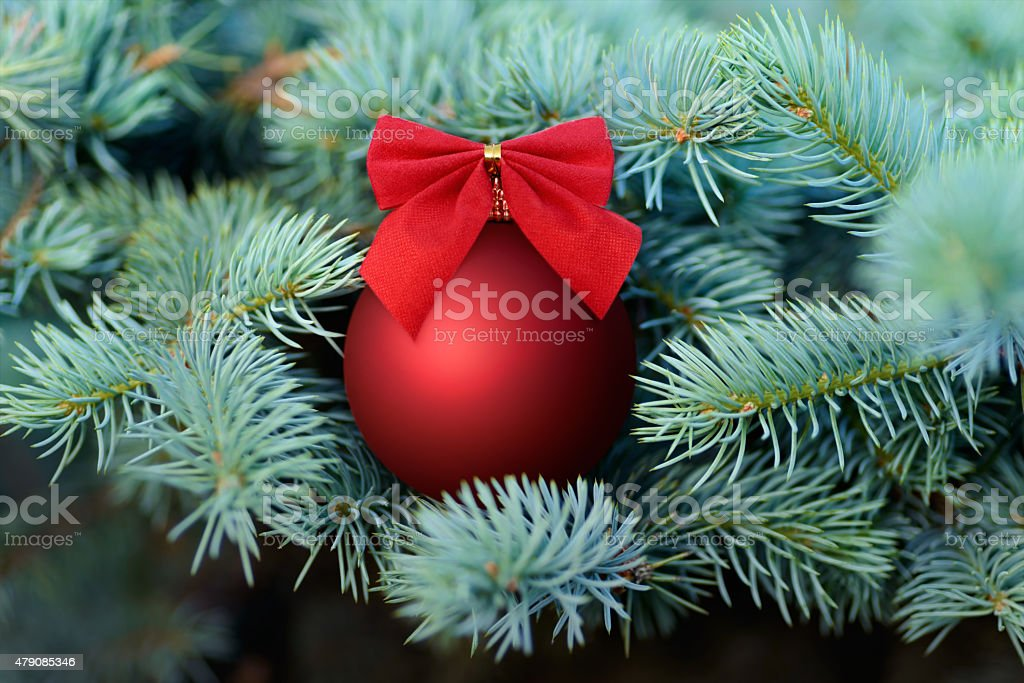 Red Christmas bauble on a fir tree royalty-free stock photo