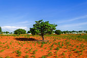 Red Clay, Blue Sky, Green Tree near Mui Ne.