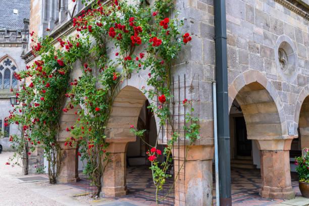 Rote Kletterrosen wachsen an der Wand des Gebäudes. – Foto