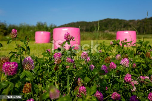 Ensilage packages. Swedish Pink Ribbon organisation for breast cancer awareness campaigned together with swedish farmers to pack ensilage in pink plastic. Red clovers was saved for insect to have a place to feed, ecology conserving