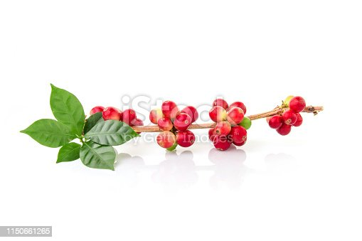 istock Red coffee beans on a branch of coffee tree, ripe and unripe berries isolated on white background 1150661265