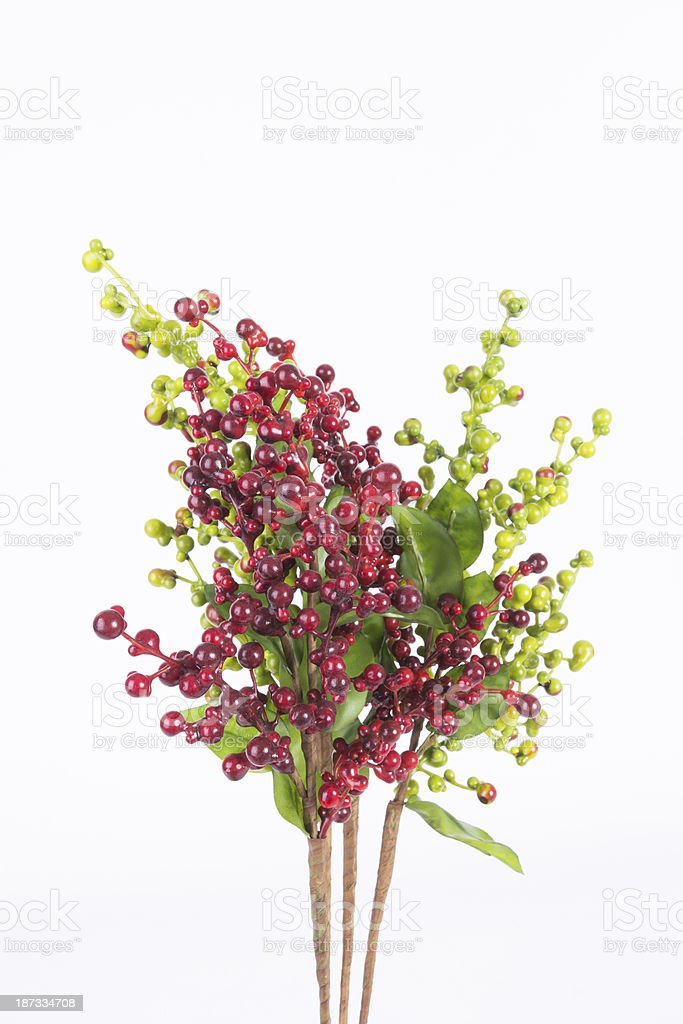 Red coffee beans on a branch of tree royalty-free stock photo