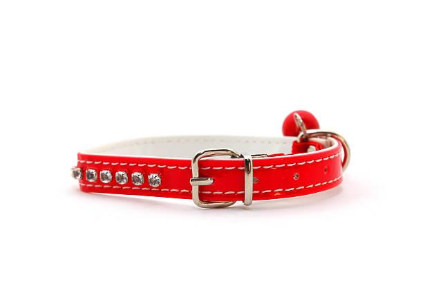 rot kragen für katzen - halsband stock-fotos und bilder