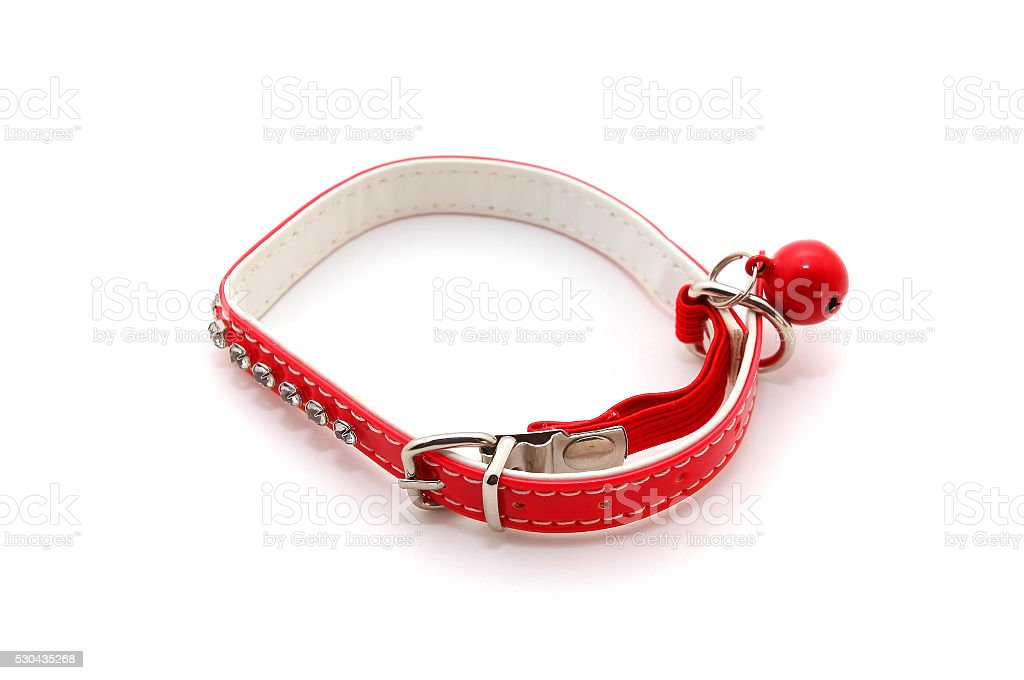 Red Collar for cat stock photo