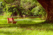 Red color bench in the autumn park. Single wooden park bench in a lush green botanical garden on tree background. ( Kolkata, India )