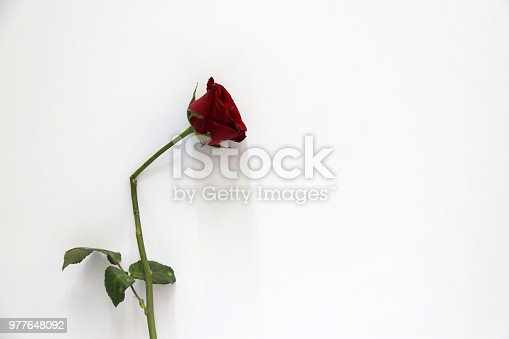 867916232 istock photo Red color of rose and green leaf on the white background. 977648092