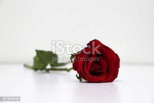 867916232 istock photo Red color of rose and green leaf on the white floor. 977648100