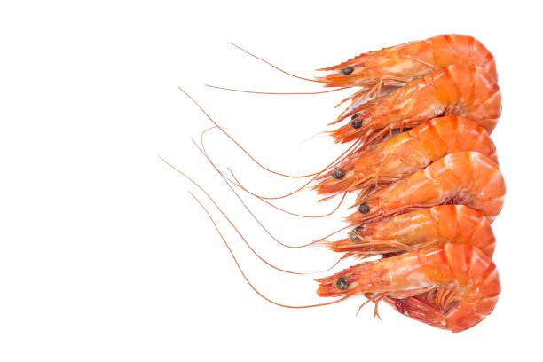 Red cooked prawn or shrimp prawns aligned right side isolated on white background. Top view stock photo