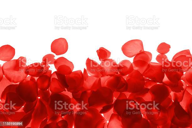Red coral pink rose petals pattern on white background isolated picture id1155195994?b=1&k=6&m=1155195994&s=612x612&h=ezm6niutulu5d9qcm d 8gsnuyhl bi1j6q6bm7vs8m=
