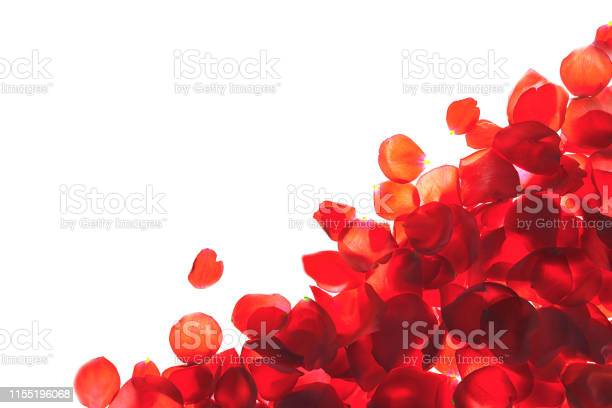 Red coral pink rose petals pattern on white background isolated picture id1155196068?b=1&k=6&m=1155196068&s=612x612&h=rxm04xyfxzzyylg1mm xdflby6l ktggcqnlesetisc=