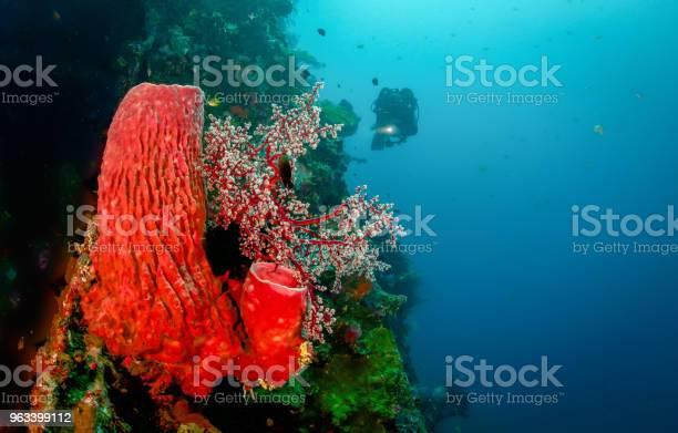 Czerwona Gąbka Koralowa - zdjęcia stockowe i więcej obrazów Czerwony
