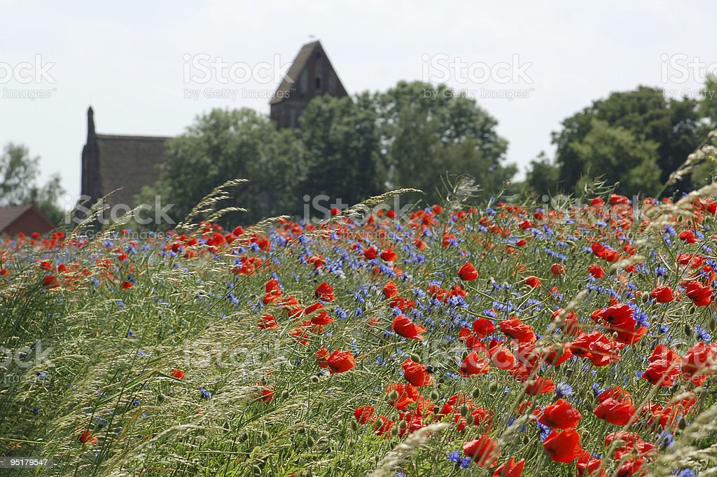 red Corn Poppy field with a church stock photo