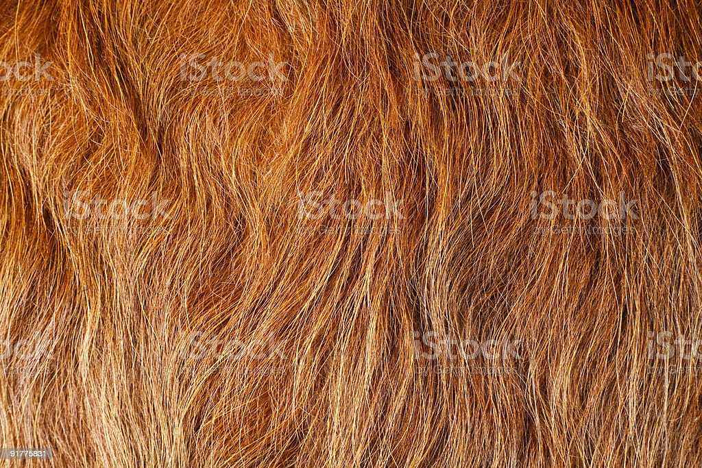 Red Cow Hide royalty-free stock photo