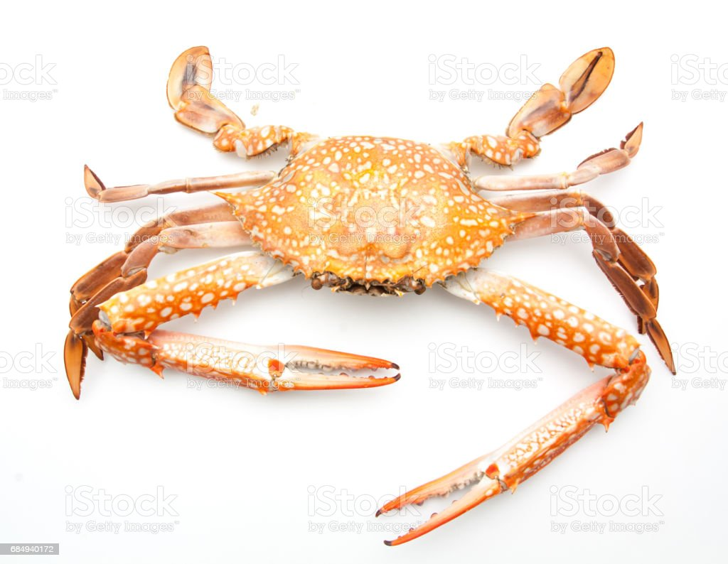 red crab isolated on white background Lizenzfreies stock-foto
