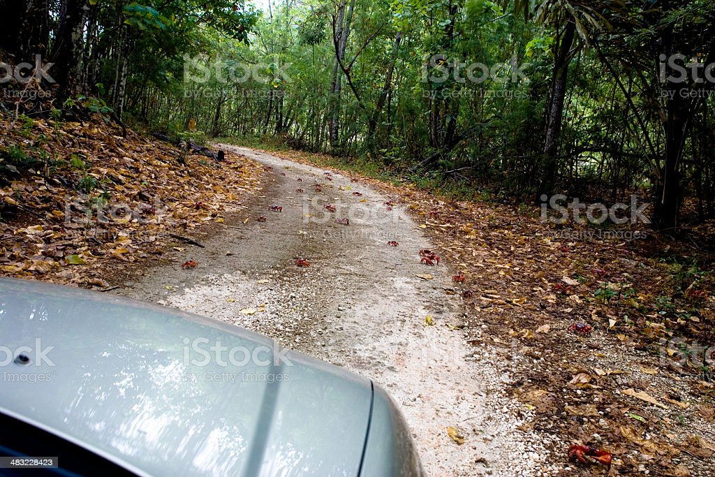 red crabs crossing. royalty-free stock photo