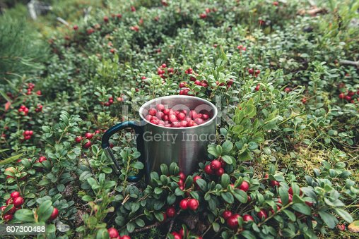 istock Red cranberries in metal cup in forest 607300488