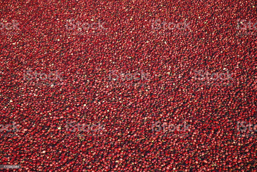 red cranberries royalty-free stock photo