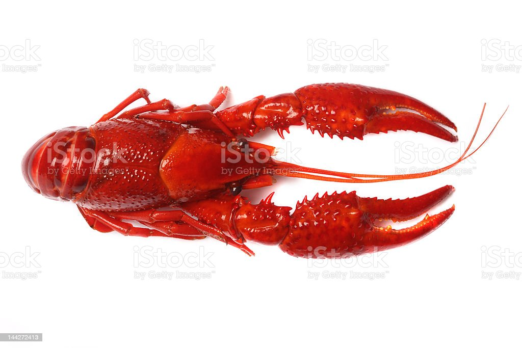 red crawfish on white background royalty-free stock photo