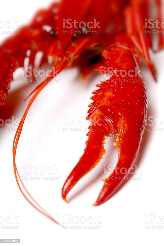 red crawfish royalty-free stock photo