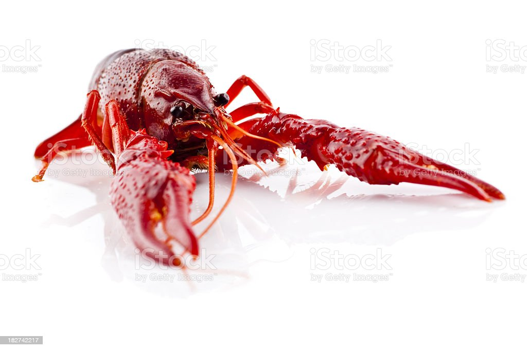 Red crayfish isolated on white royalty-free stock photo