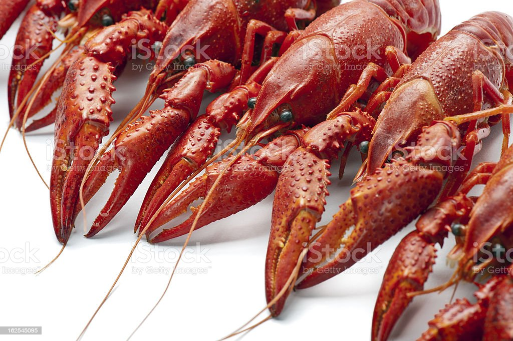 Red crayfish stock photo