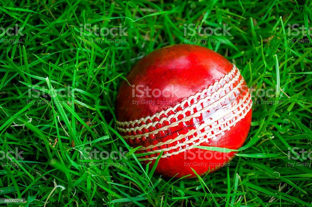 Red cricket ball in deep green grass stock photo