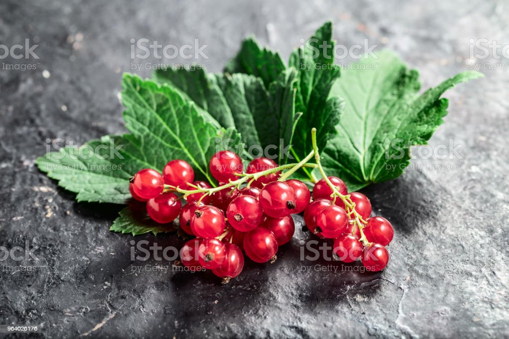Red currant  and leaf on black texture background with copyspace. - Royalty-free Antioxidant Stock Photo