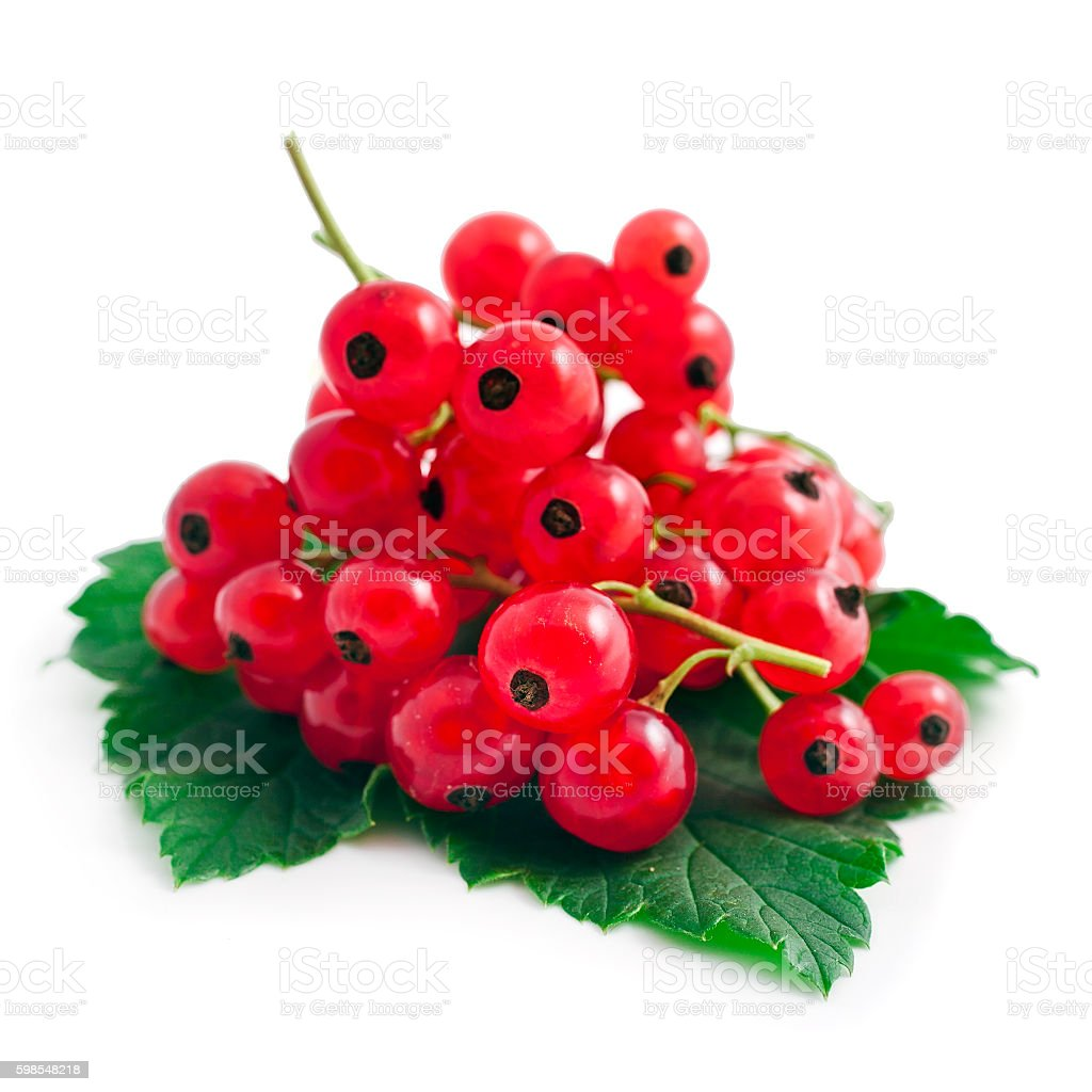 Red currant berries with leaves photo libre de droits