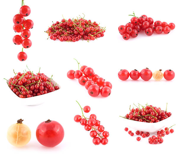 red currant collection - xxmmxx stock photos and pictures