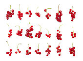 Red currant isolated on the white background