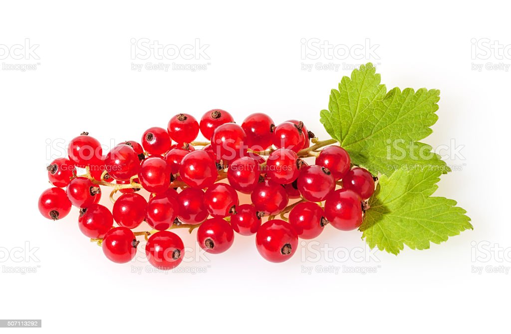 Red currant  isolated on white stock photo