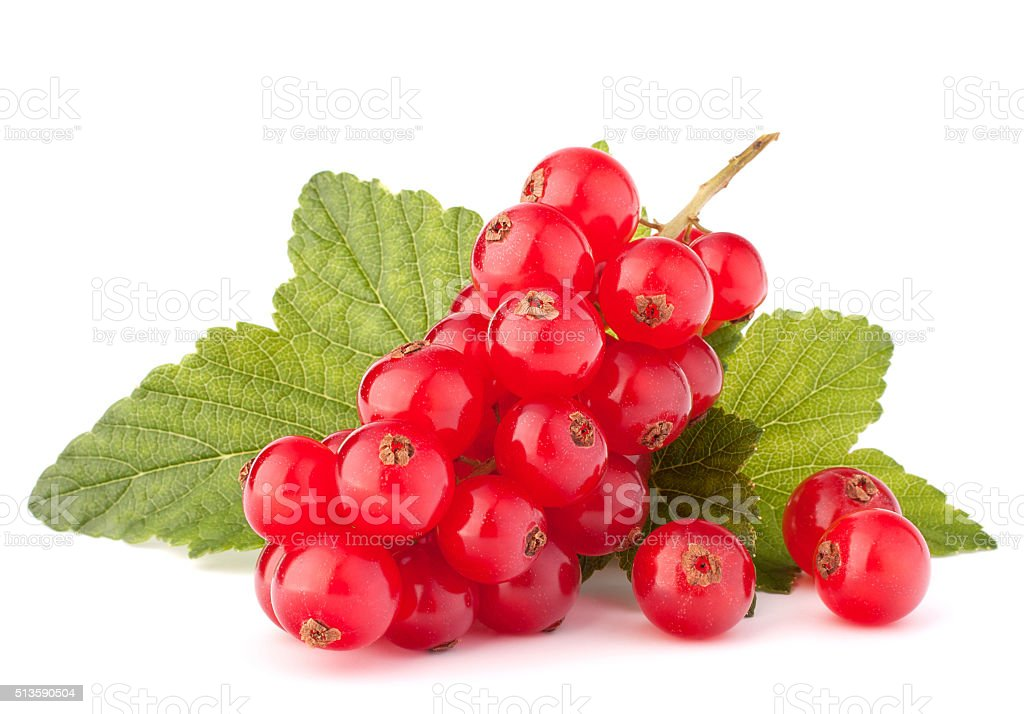 Red currants and green leaves still life stock photo