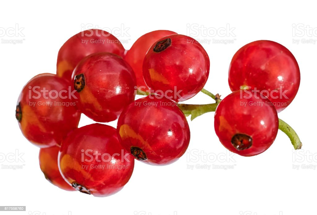 rote Johannisbeeren Zweig isoliert auf weißem Hintergrund – Foto