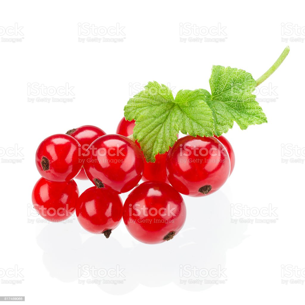 Red currants isolated on white stock photo