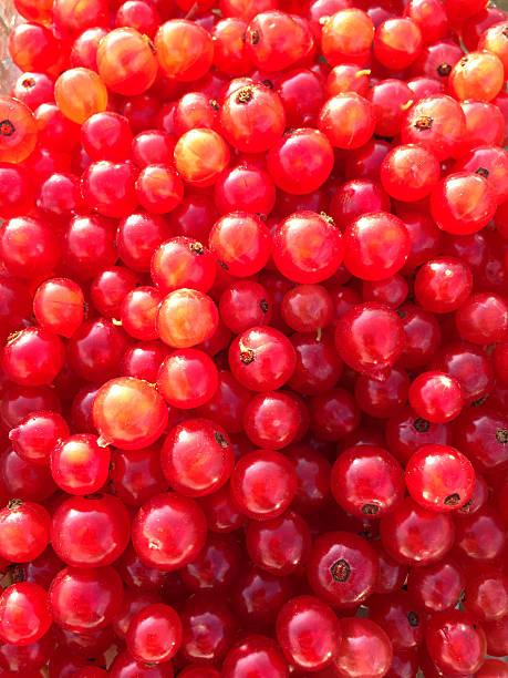 red currants - fsachs78 stockfoto's en -beelden
