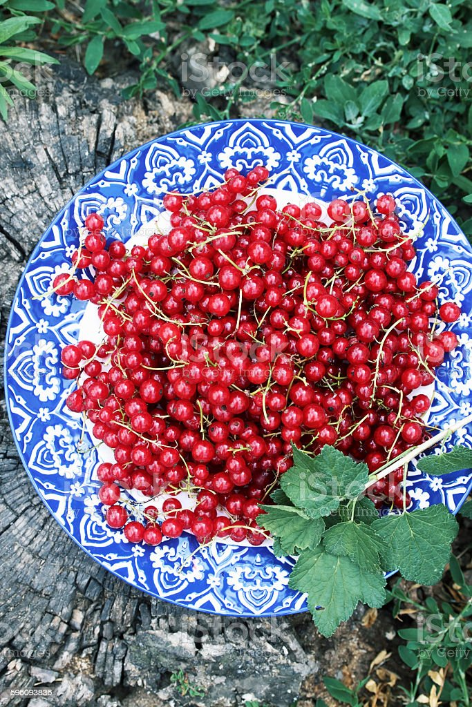 red currants, top view Lizenzfreies stock-foto