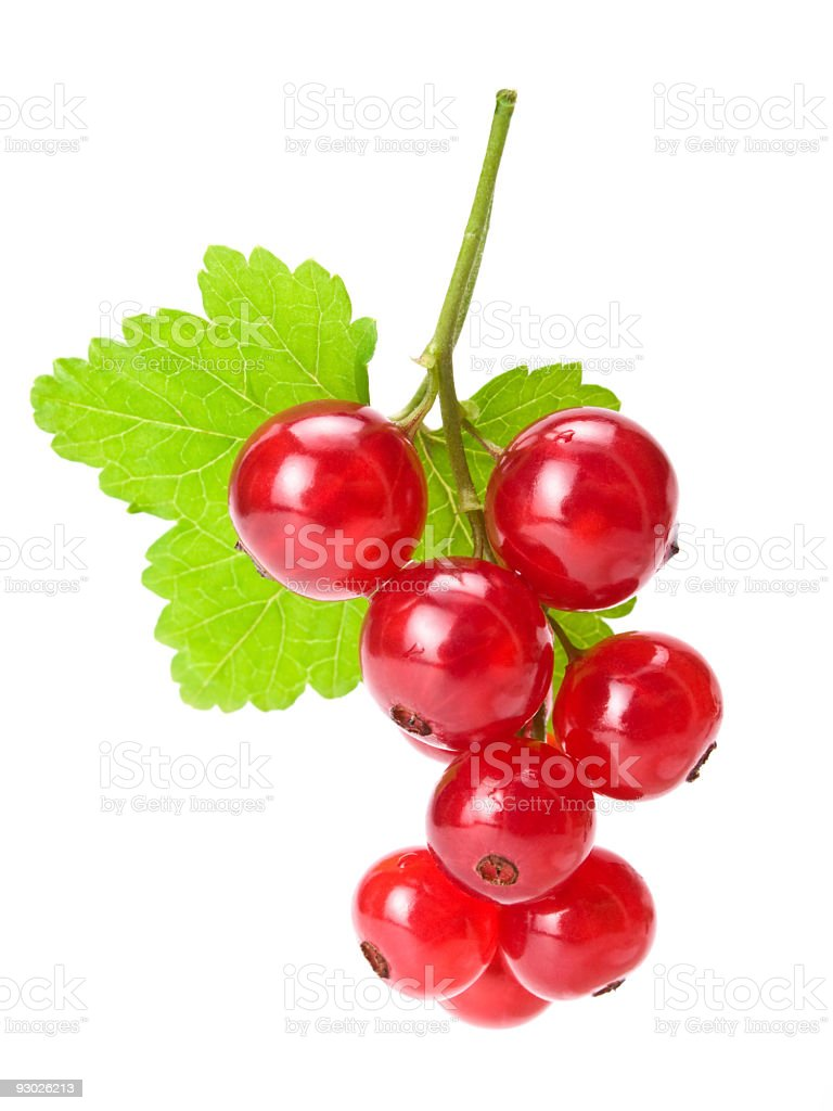 red currants w clipping path stock photo