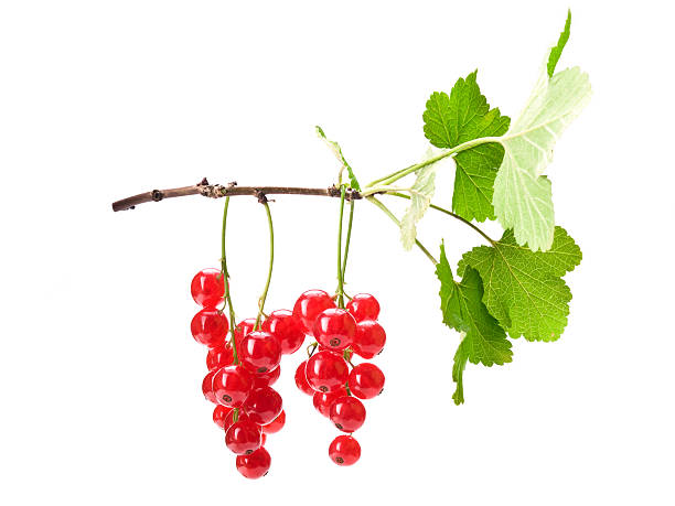red currants w clipping path - xxmmxx stock photos and pictures