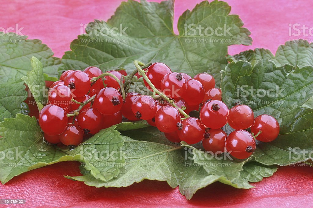 Red currants with green leafs royalty-free stock photo