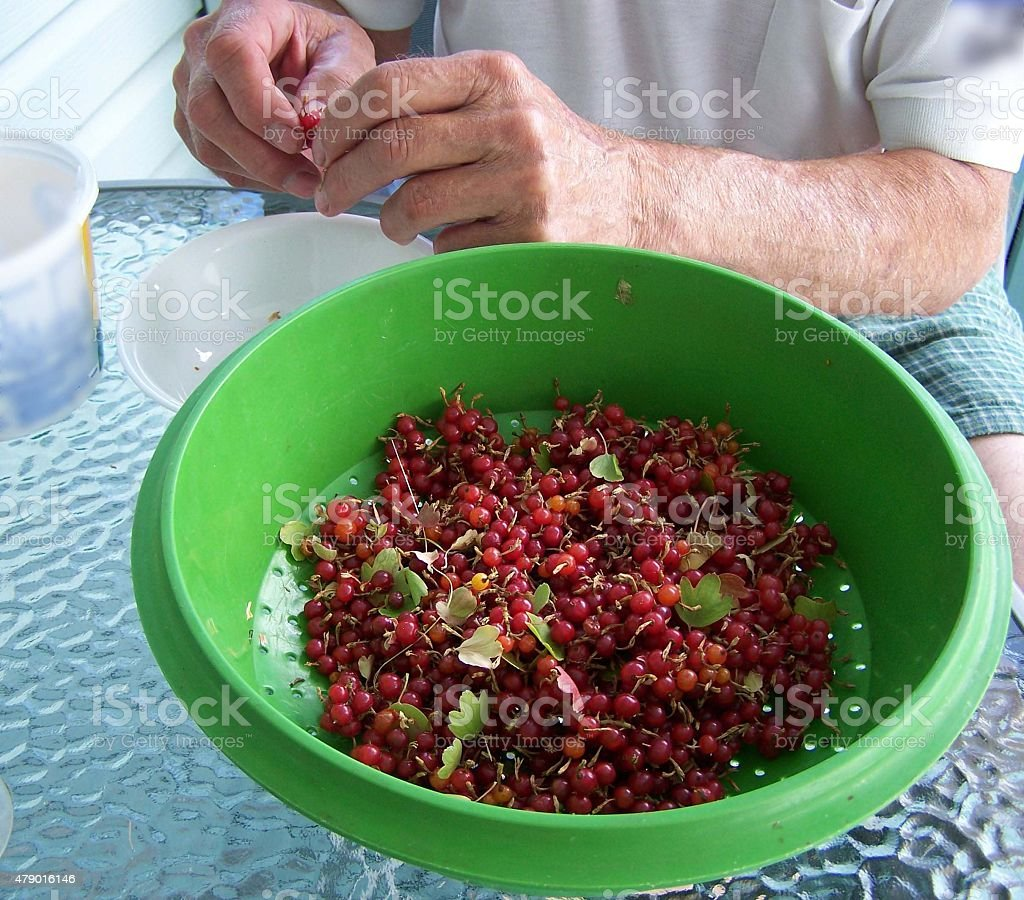 Red currents in colander stock photo